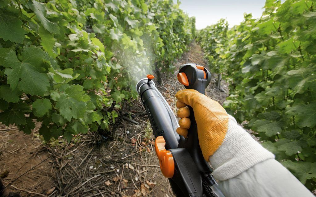 Весенняя обработка винограда от болезней и вредителей