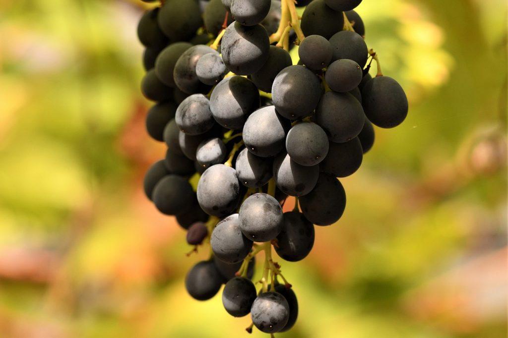 Польза черного винограда