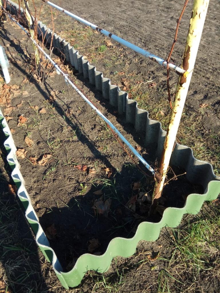 Ограждение для мульчи на винограднике